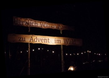 Advent im Wald 7